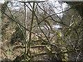 SJ7730 : Mill Pool at Offley Mill by John M