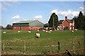 SJ6248 : Sheep by Ivy House, Sound Heath by Espresso Addict