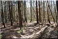 TQ7536 : High Weald Landscape Trail, Angley Wood (4) by N Chadwick