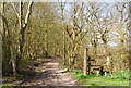 TQ7336 : High Weald Landscape Trail, Catspit Shaw by N Chadwick