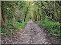 ST6064 : Guy's Hill Byway by James Ayres