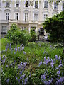TQ2978 : Bluebells in St Georges Square, Pimlico by PAUL FARMER