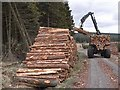 NY7878 : Forest forwarder, West Blackaburn : Week 17