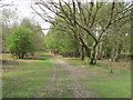 SP9710 : Bridleway on Northchurch Common by David Hawgood