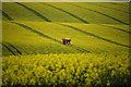 TA0120 : Spraying Oilseed Rape near Barton Grange : Week 18