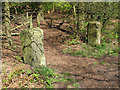 SJ8677 : Gateposts in the woods by Stephen Craven