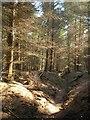 SX8596 : Path through Whiptail Wood : Week 18