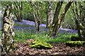 SX7975 : Lower East Lounston Nature Reserve : Week 19