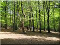 SP1096 : On Lower Nut Hurst ridge, Sutton Park by Robin Stott
