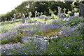 SW8238 : Bluebells at Feock by Elizabeth Scott