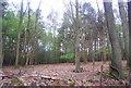 TQ2029 : Coolhurst Wood (2) by N Chadwick