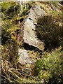 NS4580 : Shiels of Gartlea: possible fallen standing stone by Lairich Rig