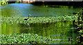 J4774 : Heron, Kiltonga, Newtownards by Albert Bridge