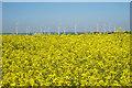TR0120 : Oilseed Rape Field by Oast House Archive