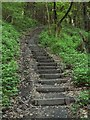 SN5503 : The Ramblers' Steps in Troserch Woods : Week 21