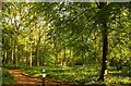 SP8908 : Footpath in the woods by Steve Daniels