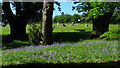 SO2801 : Bluebells and Stone Circle by David Roberts