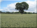 SJ4466 : Farmland of Cheshire by David Quinn