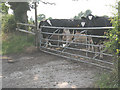 SJ7267 : Cows at Higher Farm by Stephen Craven