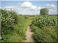 TQ5376 : The London LOOP near Slade Green by Marathon