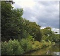 SU8602 : Bushes and trees beside Chichester canal by Paul Gillett