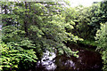 SJ9799 : River Tame:  Upstream from Grove Road Bridge by Dr Neil Clifton