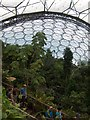 SX0455 : Inside the Rainforest biome - Eden Project by Neil Theasby