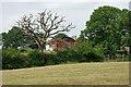 TQ1834 : Dead oak by Northlands Farm by Robin Webster