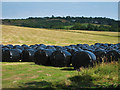 TR1636 : Covered Bales off Grange Road : Week 30
