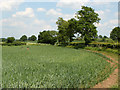 ST6156 : 2010 : Wheatfield in Hollow Marsh by Maurice Pullin