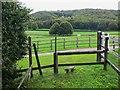 SU9316 : Footpath junction on Lavington Stud Farm by Shazz
