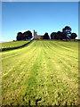 SD5383 : Newly mown field below St Patrick's Church, Preston Patrick by Karl and Ali