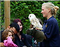 TQ3643 : Barn Owl at the British Wildlife Centre, Newchapel, Surrey by Peter Trimming