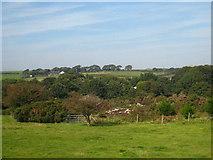SW7045 : Mine burrow at Wheal Plenty by Rod Allday