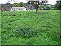 SK3098 : Gosling Moor Farm by Chris Wimbush