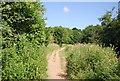 SU9947 : Wey South Path heading north by N Chadwick