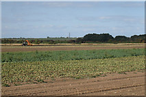TR2663 : Onion harvest by Oast House Archive
