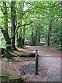 SX2268 : Tree lined footpath to Golitha Falls by Derek Voller