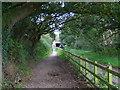 SJ3177 : Tree Tunnel by J Scott