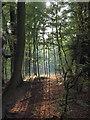 TQ6191 : Thorndon Country park autumn : Week 41