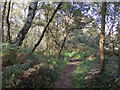 SO8490 : Bridleway in Highgate Country Park, Staffordshire by Roger  Kidd