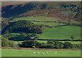 SH6303 : Talyllyn Railway train north east of Brynglas Station : Week 43