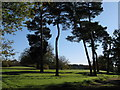 TQ4030 : Conifers near Gosses Farm by Dave Spicer