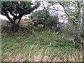 G8754 : Undergrowth, Inishtemple Island by Kenneth  Allen