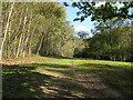 TQ3929 : Birches in Birchgrove Wood by Dave Spicer