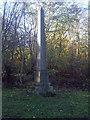 TL0939 : Memorial to Henry John Robert Osborn by Martin
