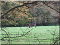 TQ1618 : Contented deer at Potcommon Furzefield by Dave Spicer