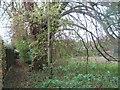 TR1635 : Footpath beside Newington Meadow by David Anstiss