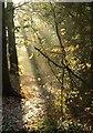 TQ2368 : Sunlight, Cannon Hill Common : Week 46