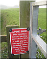 ST5890 : Supine sheep sign, Littleton Warth by Robin Stott